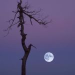 Moonrise in Shenandoah Park by Gwen Paton, f11 Digital, Score: 10
