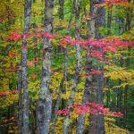 Autumn's Allure by Ronald Schaller, f16 Digital, Score: 10
