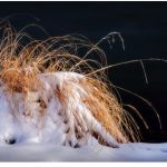 Grasses in Winter by Dave Hull, f11 Color, Score: 10