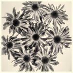 Bouquet by Laura Blake, f5.6 Digital, Score: 9