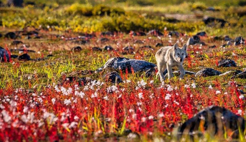 Canadian Colors by Brian Donovan, f16 Color Digital, Score: 10