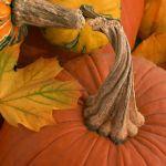 Pumpkin With a Twist by Gwen Paton, f11 Color Digital, Score: 9