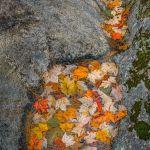 Gathering Place by Ronald Schaller, f16 Color Digital, Score: 9