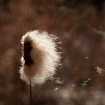 Autumn Wind by Clifford Stockdill, f8 Color Digital, Score: 10