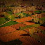 Fields and Poplar Trees by Oz Pfenninger, HM f11 Digital