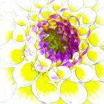 Essence of Dahlia by Nancy Myer, f16 Digital, Score: 9