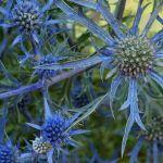 Entangled in Blue by Susan Haffke, f5.6 Digital, Score: 9