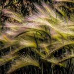 Blowing in the Wind by Victoria Ashby, f8 Digital, Score: 10