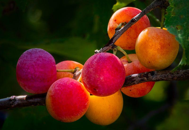 Fall Fruit Colors by Leander Urmy, f16 Digital, Score: 9