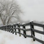 Snowy Morning in Colorado by Gwen Paton, f8 Digital, Score: 10