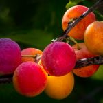 Fall Fruit Colors by Leander Urmy, f16 Digital, Score: 9