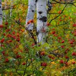 Fall Tapestry by Leander Urmy, f16 Digital, Score: 9