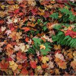 Maple Mayhem by Gary Witt, f16 Digital, Score: 9