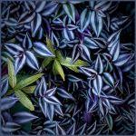 Leafy Diversity by Nancy Myer, f16 Digital, Score: 10