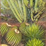 The Desert Has Many Patterns by Nancy Myer, f16 Digital, Score: 9