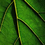 Leaf Detail by Oz Pfenninger, f16 Color, Score: 10