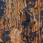 Fire Damaged Log North Rim GC by Elmer Paetow, f11 Digital, Score: 9