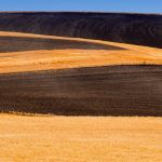 Palouse Abstract by Dan Greenberg, f16 Color Digital, Score: 9