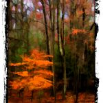 Fall in West Virginia by Ken Farman, 2nd f16 Digital