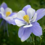 Columbine by April Moore, f8 Digital, Score: 9