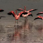 Nervous Flamingoes by Oz Pfenninger, f16 Digital, Score: 9