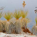 Grass Skirts by Elmer Paetow, f11 Digital, Score: 9