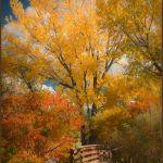 Autumn Bridge by Nancy Myer, f16 Color Digital, Score: 10