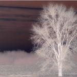 Surreal Dream of Barren Tree by Nancy Myer, f16 Color Digital, Score: 9