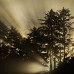 Misty Sunrise by Oz Pfenninger, f16 Color Digital, Score: 10