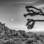 Moon Prayer by Danny Lam, f16 B&W Digital, Score: 10