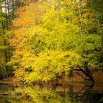 It is not Wanaka tree by Shawn Slade, f11 Color Digital, Score: 10