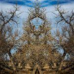 men in a tree by Travis Broxton, f16 Color Digital, Score: 9