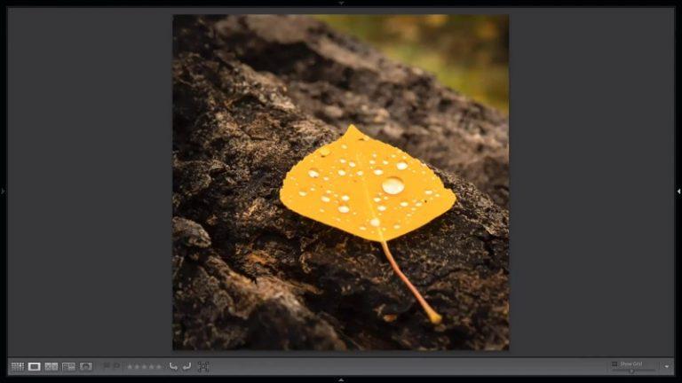 yellow leaf on bark
