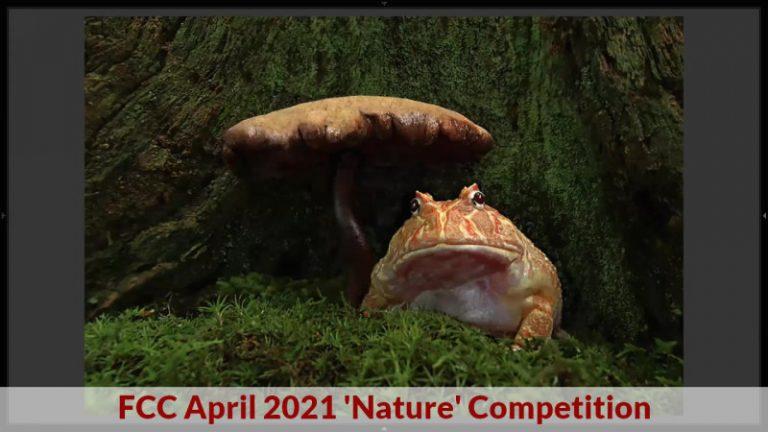 fcc apr2021 competition